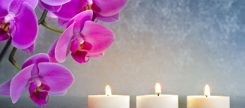 jardin-japonnais-orchidee-zen